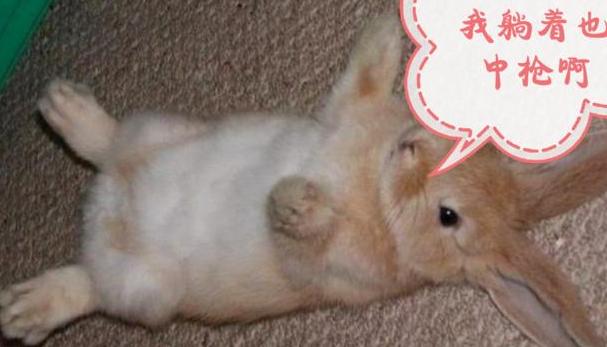 兔唇的孩子是怎么回事