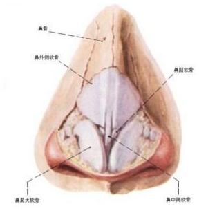鼻小柱延长术和鼻中隔延长术   让你正确认识鼻子缺陷在哪