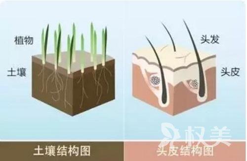 植发有风险吗 广州新发现头发种植后的效果好不好
