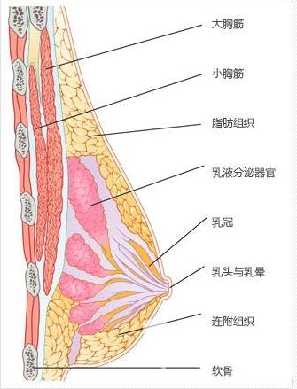 缺陷不是美 乳房再造彌補缺陷做不一樣的自己